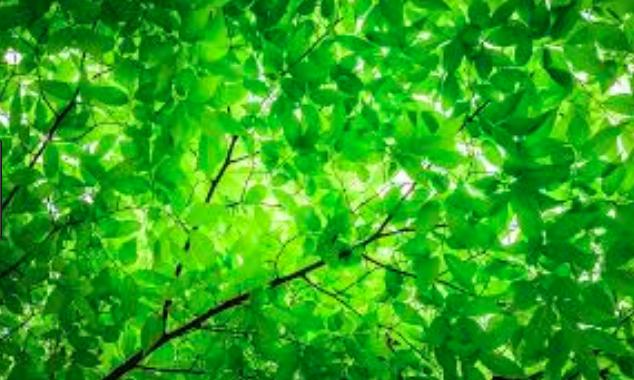 leaf patern